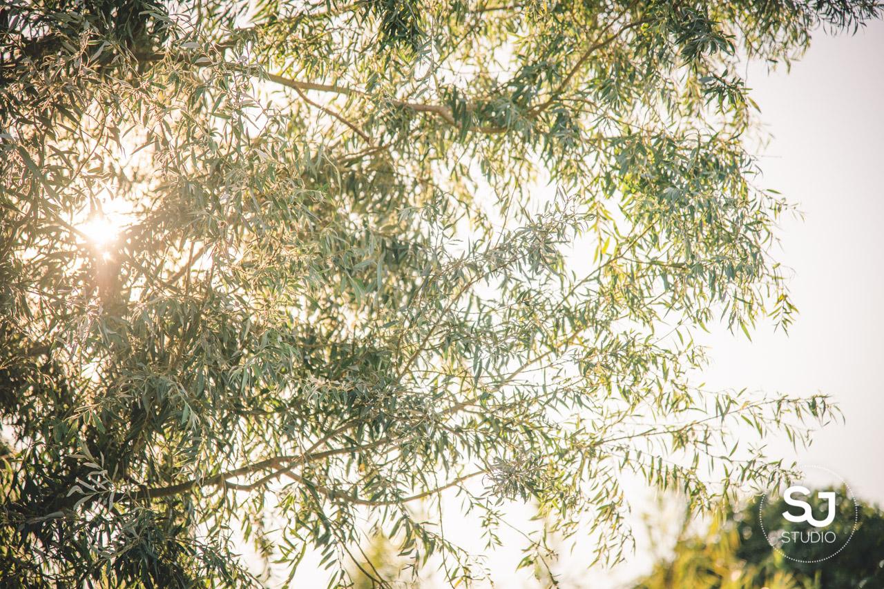 Mariage Mas des Thyms Baux de Provence Photographe de Mariage-21